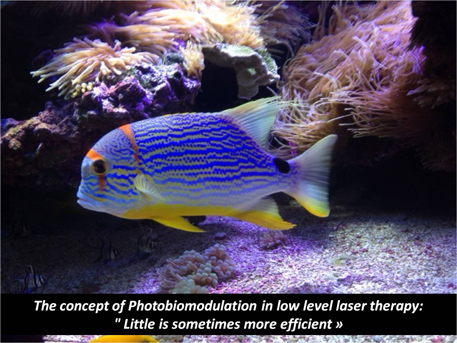 The concept of Photobiomodulation in low level laser therapy: