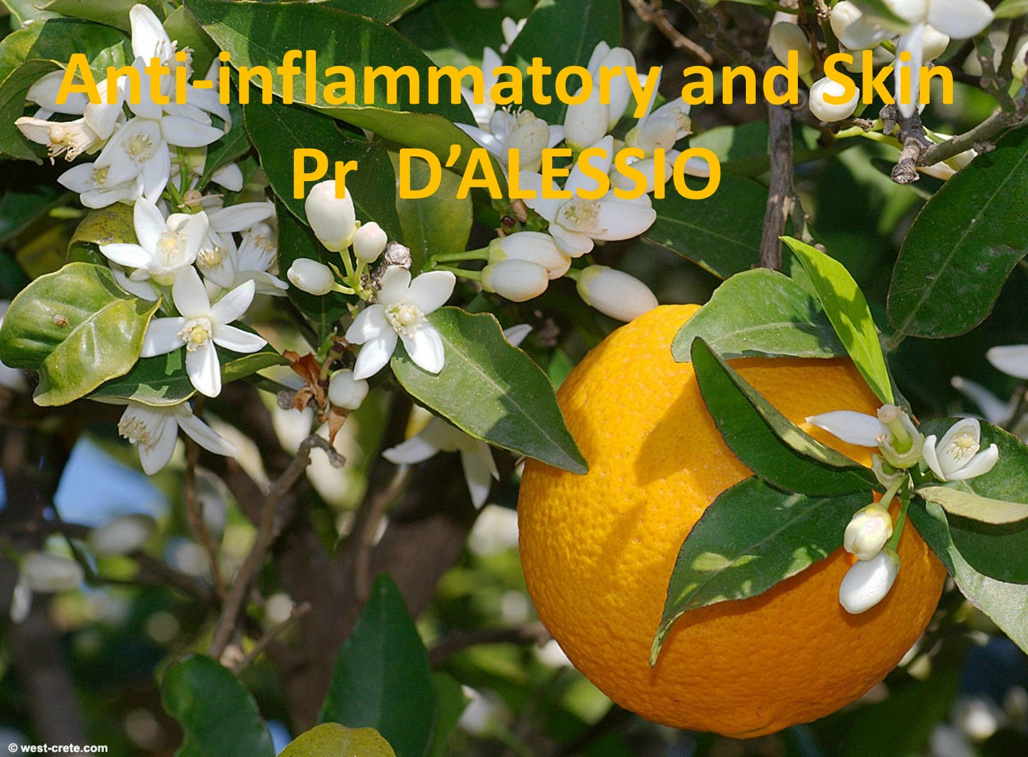 anti inflammatory and skin Pr d'Alessio