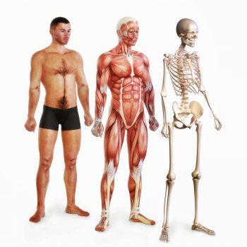 Arcachon traitement lésions syst muscu