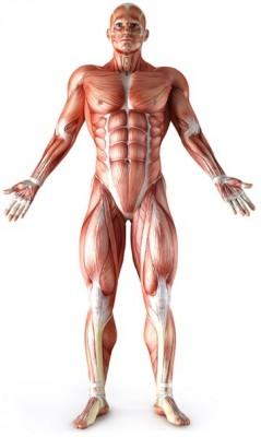 Traitement des lésions du système Musculo-Squelettique - DR ADAM  (3ème partie -  third part)