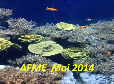 AFME MAI 2014